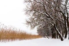 Paesaggio di inverno con gli alberi sulla riva del lago fotografia stock libera da diritti