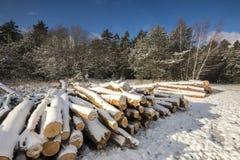 Paesaggio di inverno con i ceppi del taglio sotto neve Fotografie Stock Libere da Diritti