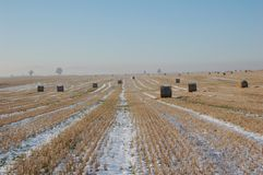 Paesaggio di inverno con i gruppi Fotografia Stock Libera da Diritti