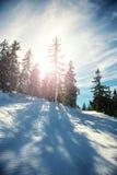 Paesaggio di inverno con il chiarore della lente fotografia stock libera da diritti