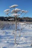 Paesaggio di inverno con il fiore ed il cielo blu congelati Fotografia Stock Libera da Diritti