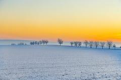 Paesaggio di inverno con il vicolo dell'albero nel tramonto Fotografie Stock Libere da Diritti