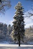Paesaggio di inverno con l'abete rosso Fotografia Stock