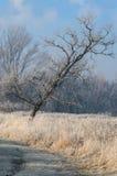 Paesaggio di inverno con l'albero Immagine Stock