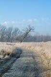 Paesaggio di inverno con l'albero Immagini Stock
