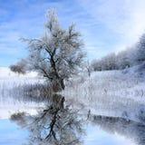 Paesaggio di inverno con l'albero immagine stock libera da diritti