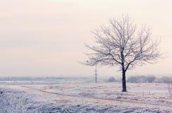 Paesaggio di inverno con l'albero congelato Fotografia Stock