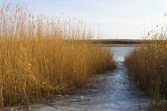 Paesaggio di inverno con la canna un chiaro giorno Fotografia Stock