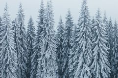 Paesaggio di inverno con la foresta attillata Fotografie Stock