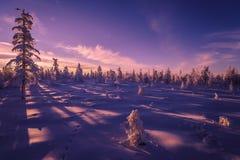 Paesaggio di inverno con la foresta, il cielo nuvoloso ed il sole immagine stock