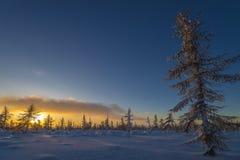 Paesaggio di inverno con la foresta, il cielo nuvoloso ed il sole fotografie stock