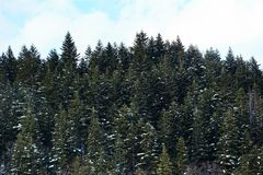 Paesaggio di inverno con la foresta nevosa alta nelle montagne Fotografia Stock Libera da Diritti