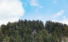 Paesaggio di inverno con la foresta nevosa alta nelle montagne Fotografie Stock