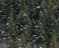 Paesaggio di inverno con la foresta nevosa alta nelle montagne Immagine Stock