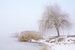 Paesaggio di inverno con la foschia Fotografie Stock