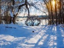 Paesaggio di inverno con la regolazione del sole fra l'albero Immagine Stock