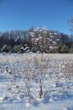 Paesaggio di inverno con le piante ed il cielo blu congelati Fotografia Stock Libera da Diritti