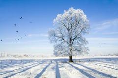 Paesaggio di inverno con neve Fotografia Stock