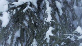 Paesaggio di inverno con neve che cade lentamente e coperto spruce di neve video d archivio