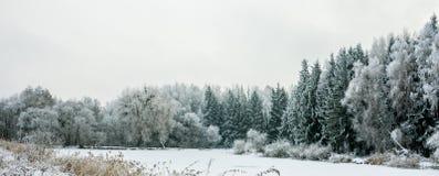 Paesaggio di inverno con neve e gli alberi Immagine Stock Libera da Diritti