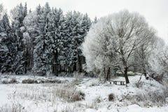 Paesaggio di inverno con neve e gli alberi Fotografia Stock Libera da Diritti