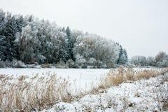 Paesaggio di inverno con neve e gli alberi Immagini Stock Libere da Diritti
