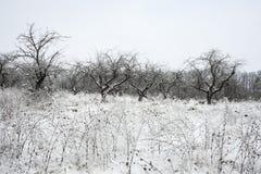 Paesaggio di inverno con neve e gli alberi Immagini Stock