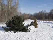 Paesaggio di inverno con piccolo abete Fotografia Stock Libera da Diritti