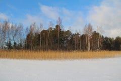 Paesaggio di inverno con un bello lago congelato e cespugli nella sera Fotografia Stock Libera da Diritti