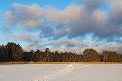 Paesaggio di inverno con un bello lago congelato e cespugli nella sera Fotografie Stock