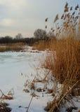 Paesaggio di inverno con un lago e un'alta erba asciutta Immagini Stock Libere da Diritti