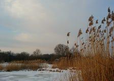 Paesaggio di inverno con un lago e un'alta erba asciutta Fotografia Stock Libera da Diritti