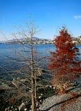 Paesaggio di inverno del lago Lemano, con gli alberi nella priorità alta, i Fotografia Stock