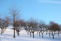 Paesaggio di inverno dell'albero da frutto fotografia stock