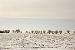 Paesaggio di inverno dell'Illinois Immagine Stock