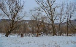 Paesaggio di inverno della contea di Mohe, Cina fotografia stock libera da diritti