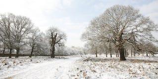 Paesaggio di inverno della sosta di Richmond fotografia stock