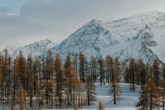 Paesaggio di inverno delle alpi italiane, vicino a Sestriere, priorità alta degli alberi di larice Immagini Stock