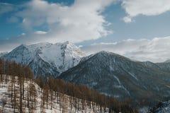 Paesaggio di inverno delle alpi italiane, vicino a Sestriere, priorità alta degli alberi di larice Immagine Stock Libera da Diritti