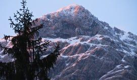 Paesaggio di inverno delle montagne nevose con il pino in alpi julian nel tramonto nella posizione orizzontale Fotografia Stock