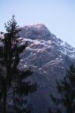 Paesaggio di inverno delle montagne nevose con il pino in alpi julian nel tramonto nella posizione verticale Immagini Stock