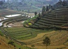 Paesaggio di inverno delle risaie Immagini Stock Libere da Diritti