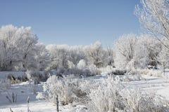 Paesaggio di inverno dello Snowy Fotografie Stock Libere da Diritti