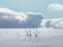 Paesaggio di inverno di Minimalistic fotografia stock libera da diritti