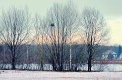 Paesaggio di inverno di sera con gli alberi Immagini Stock Libere da Diritti