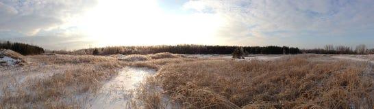 Paesaggio di inverno di Snowy immagine stock