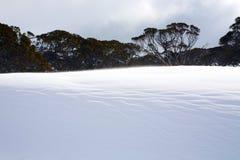 Paesaggio di inverno di Snowy Fotografia Stock