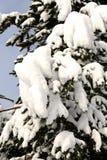 Paesaggio di inverno dopo le precipitazioni nevose nel giorno soleggiato Immagine Stock Libera da Diritti