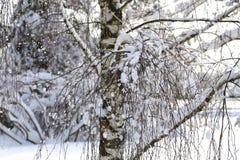 Paesaggio di inverno dopo le precipitazioni nevose nel giorno soleggiato Fotografia Stock Libera da Diritti