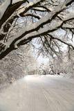 Paesaggio di inverno dopo le precipitazioni nevose nel giorno soleggiato Immagini Stock